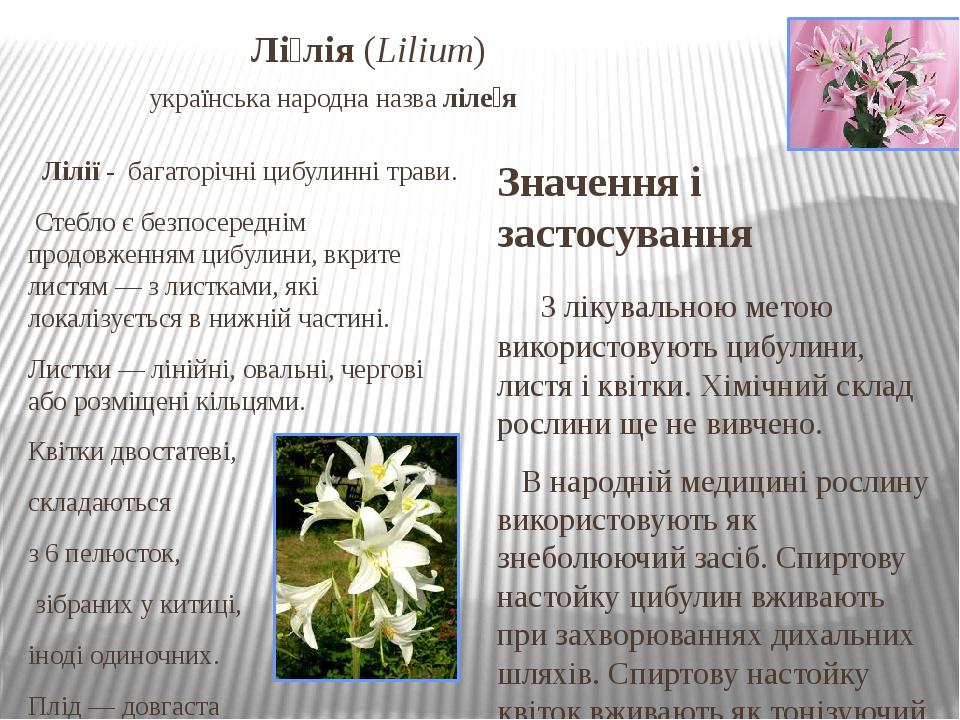 Лі́лія(Lilium) українська народна назваліле́я Лілії- багаторічні цибулиннітрави. Стеблоє безпосереднім продовженням цибулини, вкрите листям...