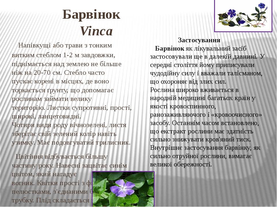 Барвінок Vinca Напівкущіаботравиз тонким виткимстеблом1-2 м завдовжки, піднімається над землею не більше ніж на 20-70 см. Стебло часто пускає...