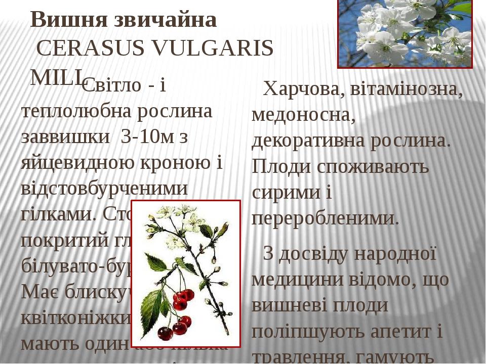 Вишня звичайна CERASUS VULGARIS MILL Світло - і теплолюбна рослина заввишки 3-10м з яйцевидною кроною і відстовбурченими гілками. Стовбур покритий ...