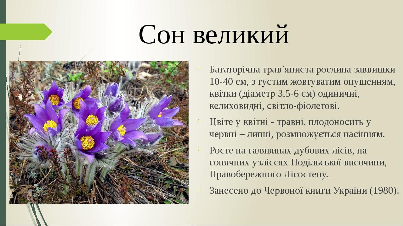 Багаторічна трав`яниста рослина заввишки 10-40 см, з густим жовтуватим опушенням, квітки (діаметр 3,5-6 см) одиничні, келиховидні, світло-фіолетові...