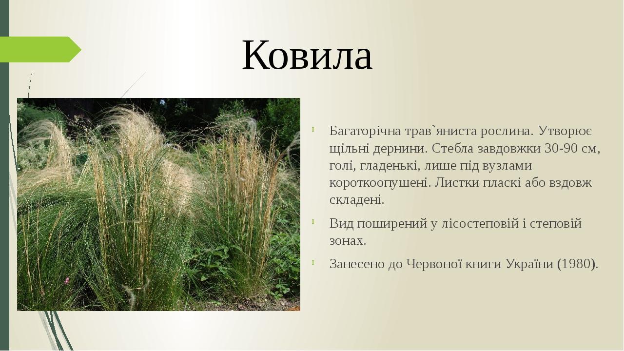 Багаторічна трав`яниста рослина. Утворює щільні дернини. Стебла завдовжки 30-90 см, голі, гладенькі, лише під вузлами короткоопушені. Листки пласкі...