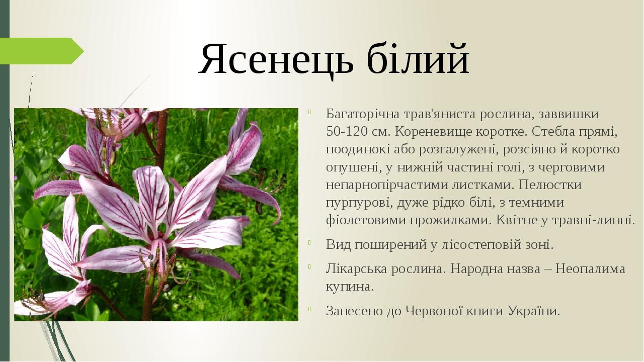 Багаторічна трав'яниста рослина, заввишки 50-120 см. Кореневище коротке. Стебла прямі, поодинокі або розгалужені, розсіяно й коротко опушені, у ниж...