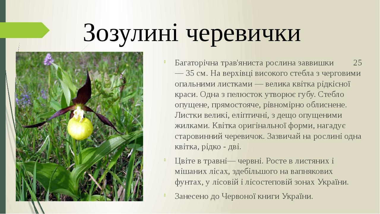Багаторічна трав'яниста рослина заввишки 25 — 35 см. На верхівці високого стебла з черговими опальними листками — велика квітка рідкісної краси. Од...