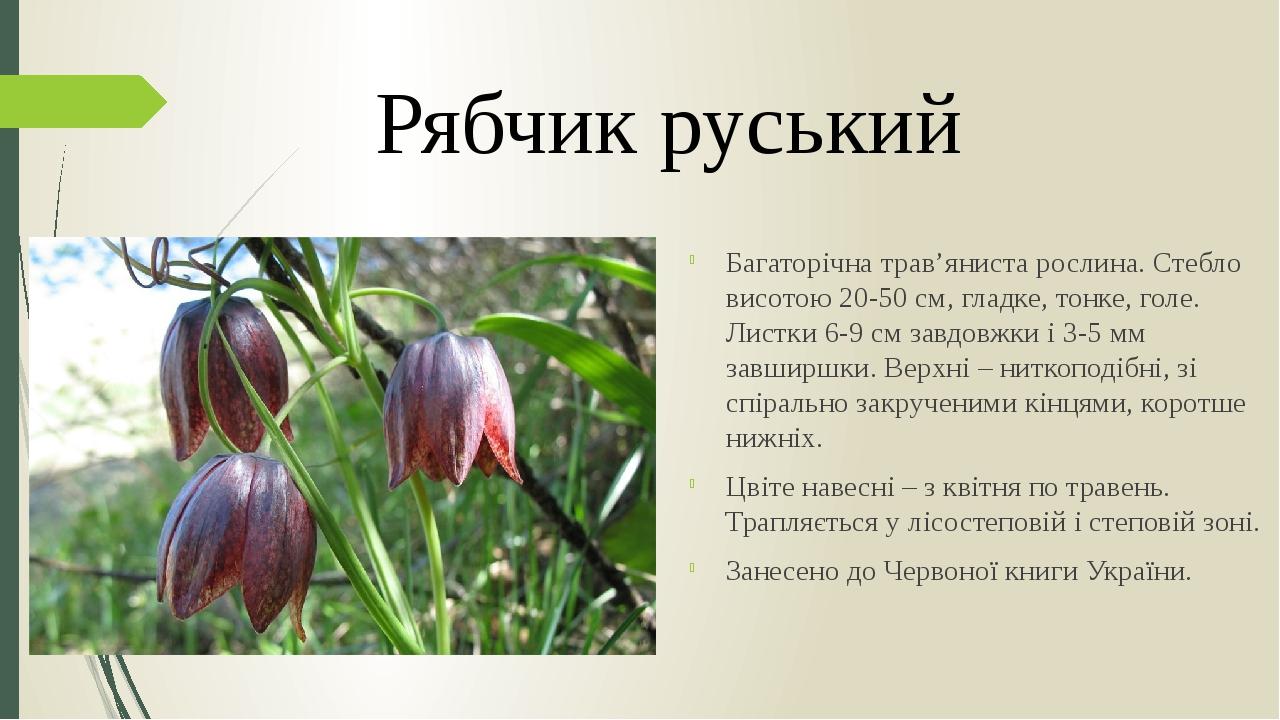 Багаторічна трав'яниста рослина. Стебло висотою 20-50 см, гладке, тонке, голе. Листки 6-9 см завдовжки і 3-5 мм завширшки. Верхні – ниткоподібні, з...
