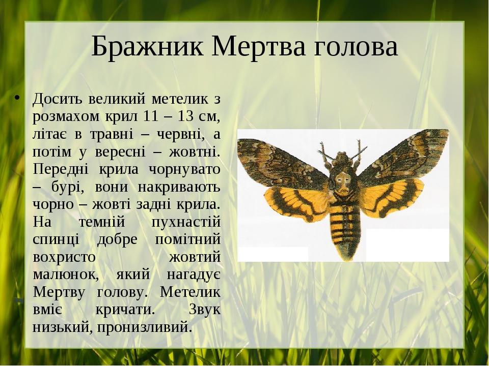 Бражник Мертва голова Досить великий метелик з розмахом крил 11 – 13 см, літає в травні – червні, а потім у вересні – жовтні. Передні крила чорнува...