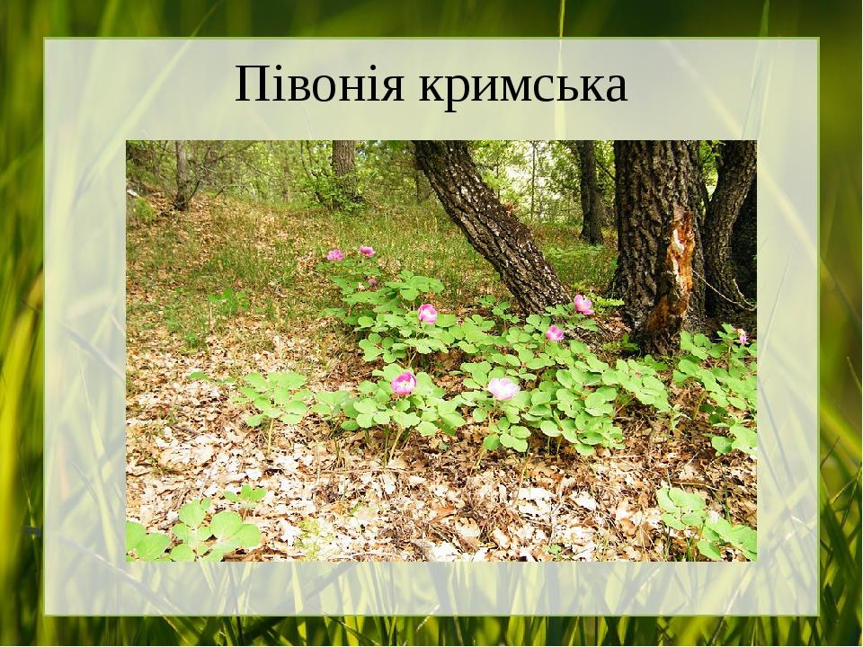 Півонія кримська