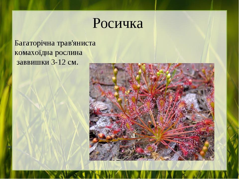 Росичка Багаторічна трав'яниста комахоїдна рослина заввишки 3-12 см.