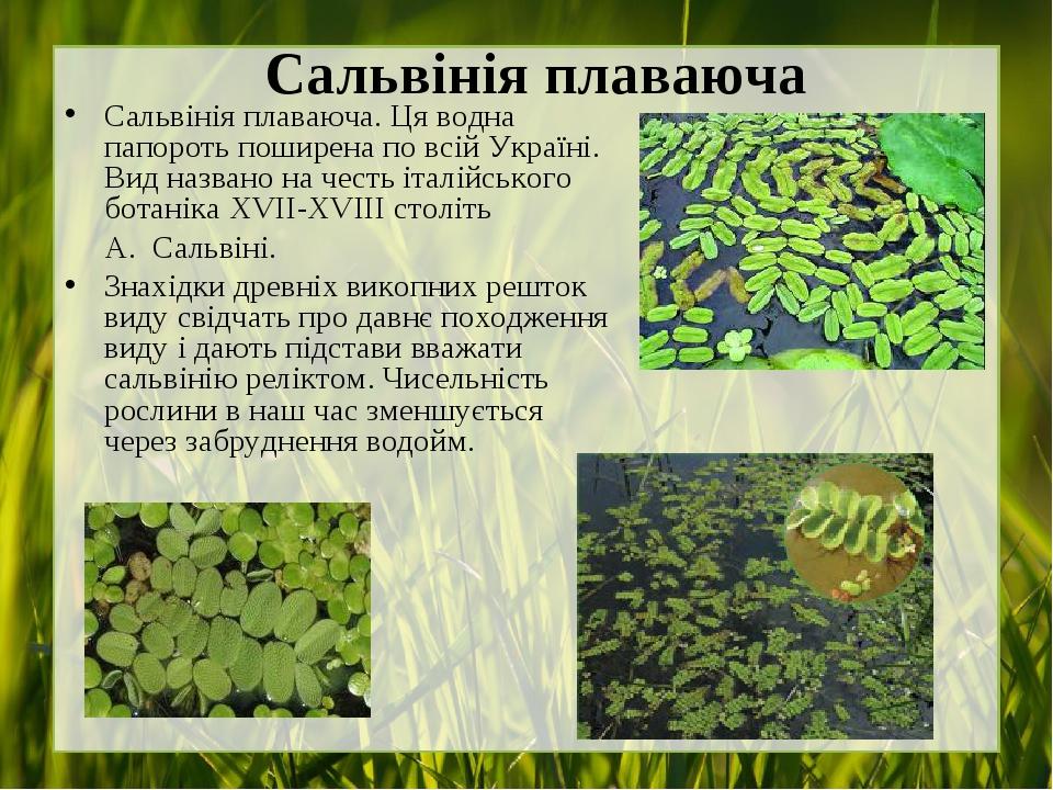 Сальвінія плаваюча Сальвінія плаваюча.Ця водна папороть поширена по всій Україні. Вид названо на честь італійського ботанікаXVII-XVIIIстоліть А....