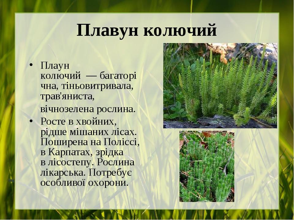 Плавун колючий Плаун колючий—багаторічна, тіньовитривала, трав'яниста, вічнозелена рослина. Росте вхвойних, рідшемішаних лісах. Поширена наП...