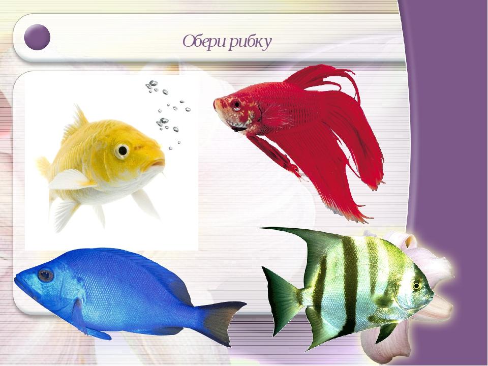 Обери рибку