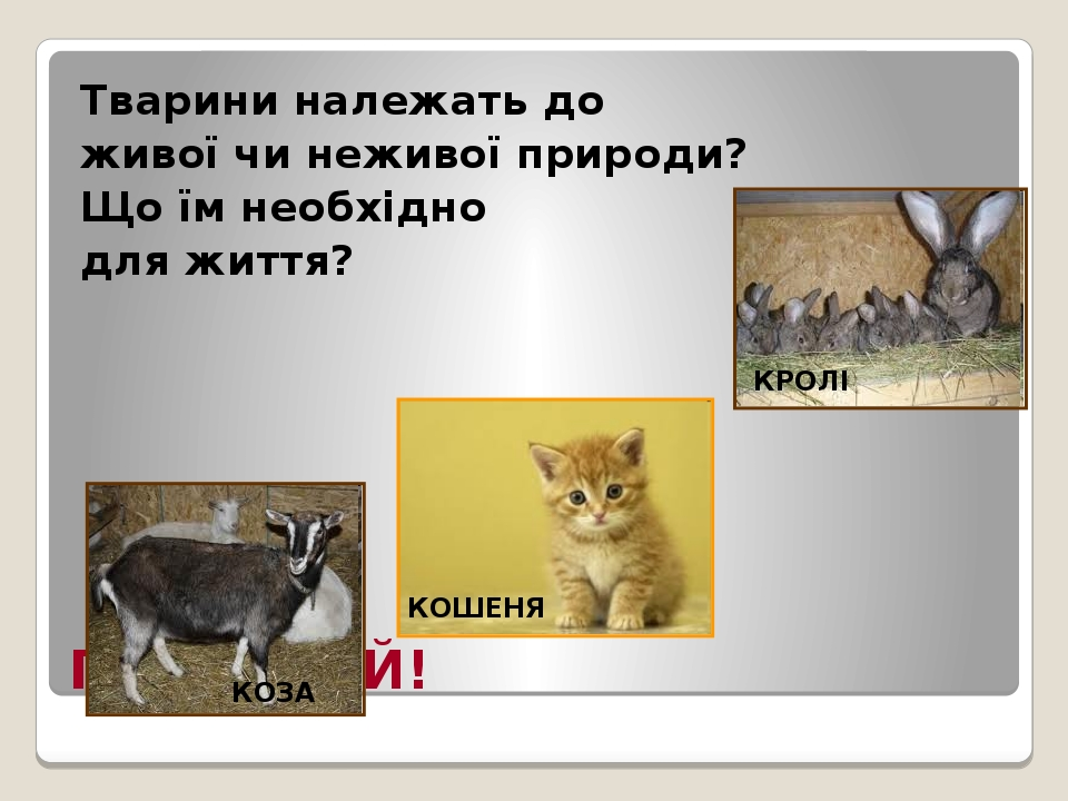 ПРИГАДАЙ! Тварини належать до живої чи неживої природи? Що їм необхідно для життя? КОЗА КОШЕНЯ КРОЛІ