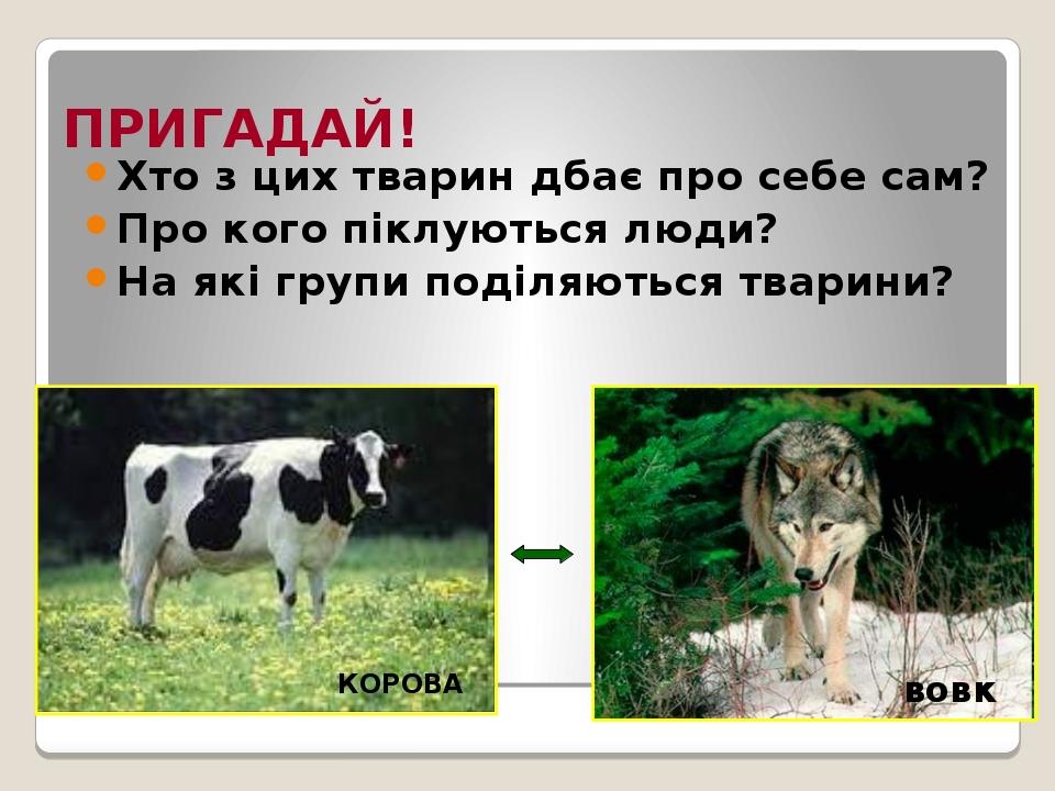 ПРИГАДАЙ! Хто з цих тварин дбає про себе сам? Про кого піклуються люди? На які групи поділяються тварини? КОРОВА вовк