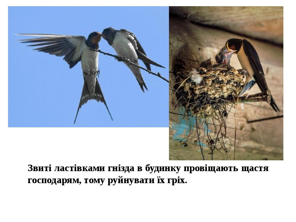 Звиті ластівками гнізда в будинку провіщають щастя господарям, тому руйнувати їх гріх.