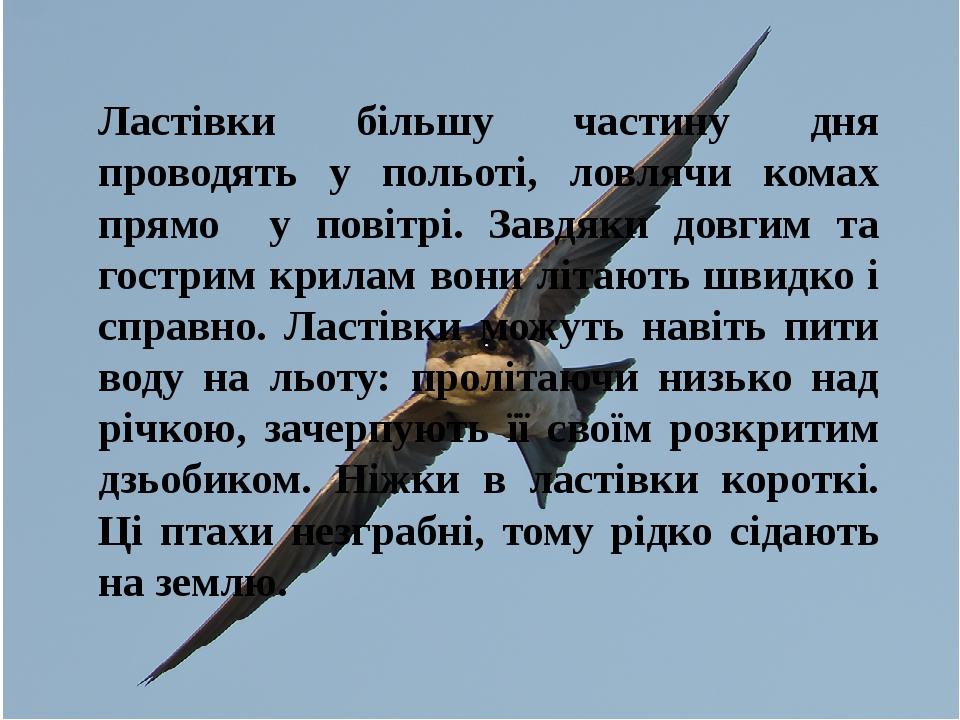 Ластівки більшу частину дня проводять у польоті, ловлячи комах прямо у повітрі. Завдяки довгим та гострим крилам вони літають швидко і справно. Лас...