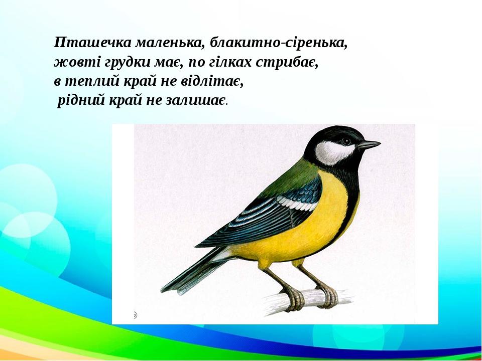Пташечка маленька, блакитно-сіренька, жовті грудки має, по гілках стрибає, в теплий край не відлітає, рідний край не залишає.