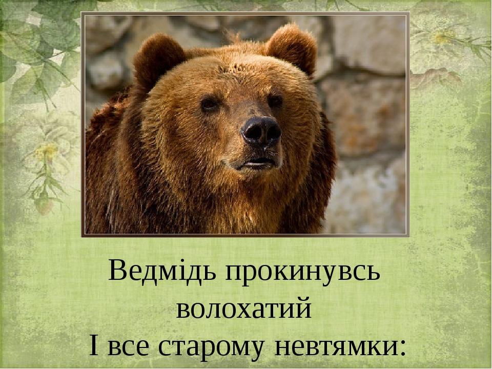 Ведмідь прокинувсь волохатий І все старому невтямки: Чому, неначе пташенята, Розкрили дзьобики бруньки.