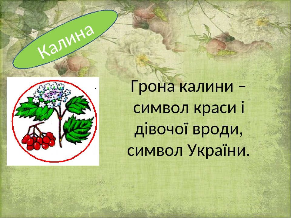 Грона калини – символ краси і дівочої вроди, символ України. Калина