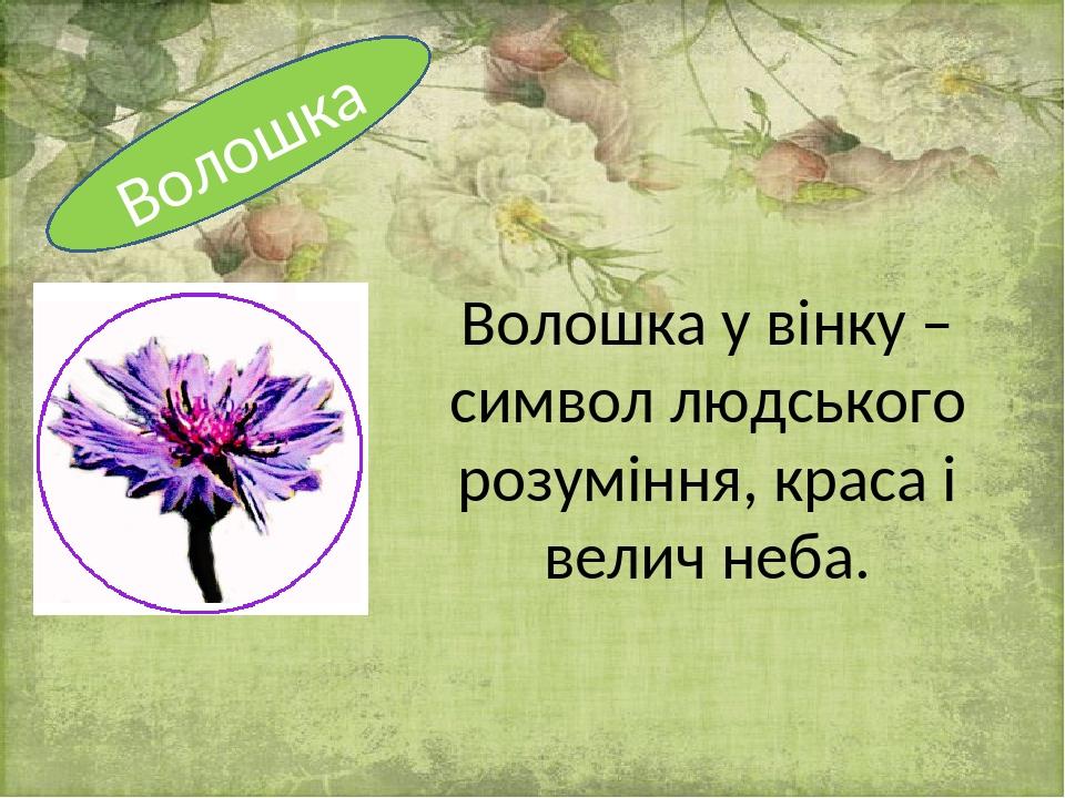 Волошка у вінку – символ людського розуміння, краса і велич неба. Волошка
