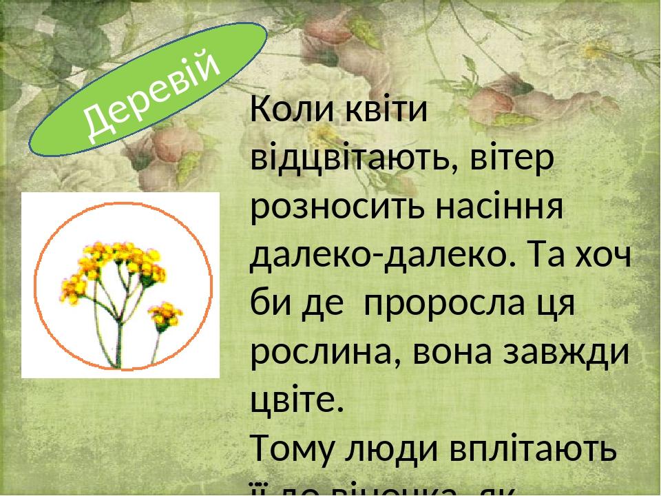 Коли квіти відцвітають, вітер розносить насіння далеко-далеко. Та хоч би де проросла ця рослина, вона завжди цвіте. Тому люди вплітають її до віноч...