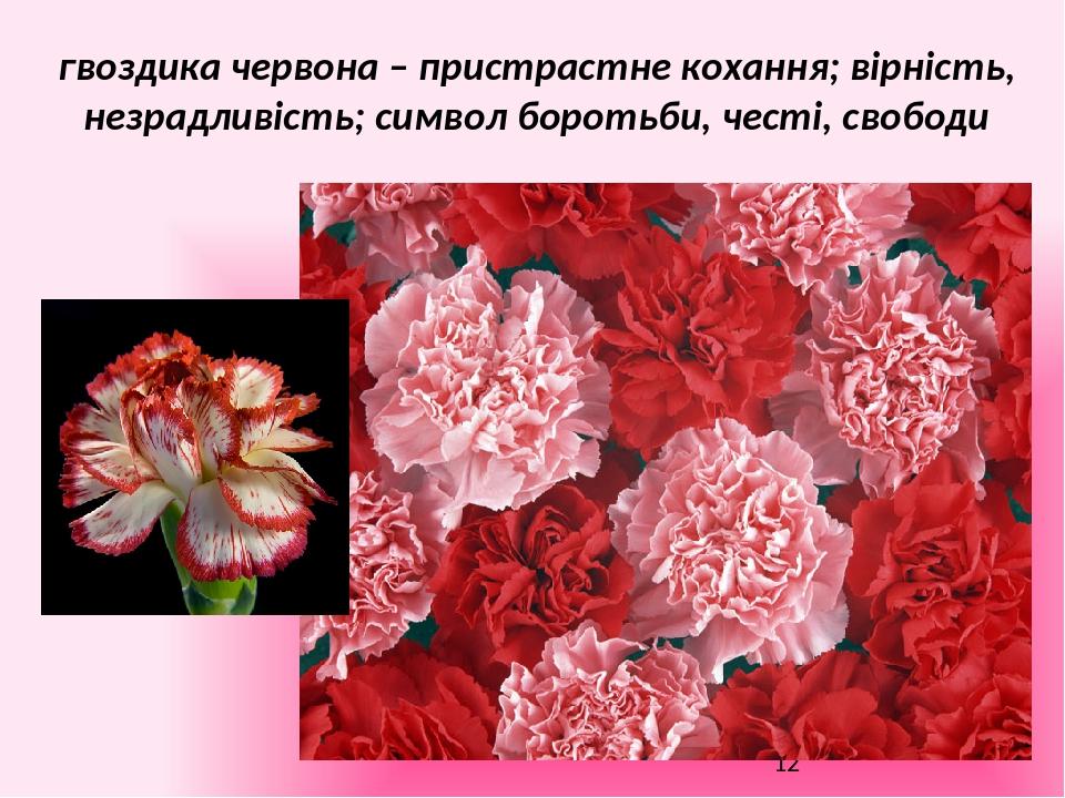 гвоздика червона – пристрастне кохання; вірність, незрадливість; символ боротьби, честі, свободи