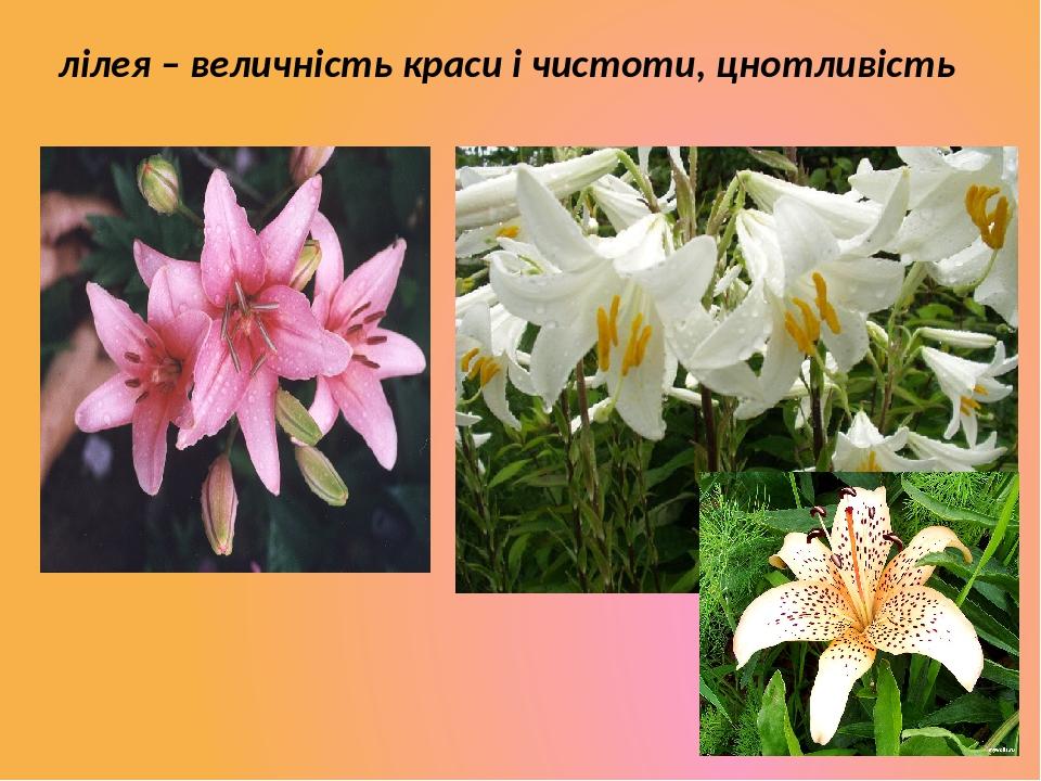 лілея – величність краси і чистоти, цнотливість