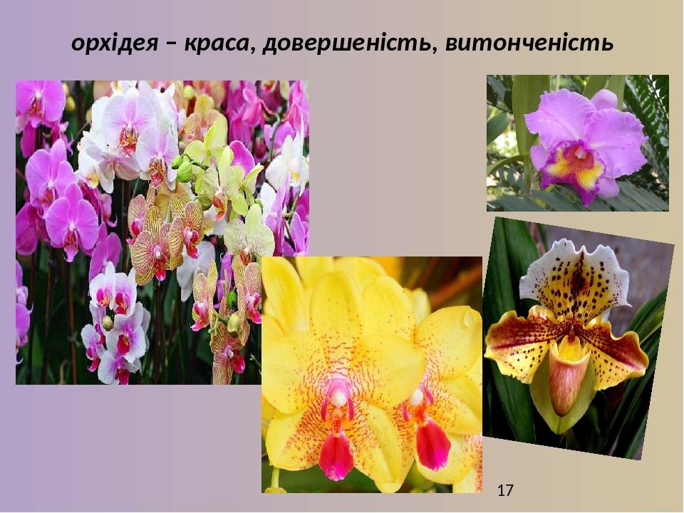 орхідея – краса, довершеність, витонченість