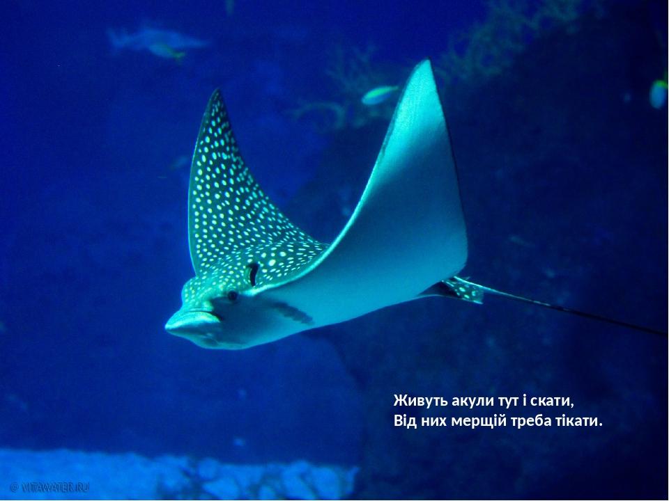Живуть акули тут і скати, Від них мерщій треба тікати.