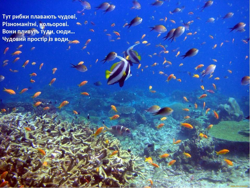 Тут рибки плавають чудові, Різноманітні, кольорові. Вони пливуть туди, сюди… Чудовий простір із води.