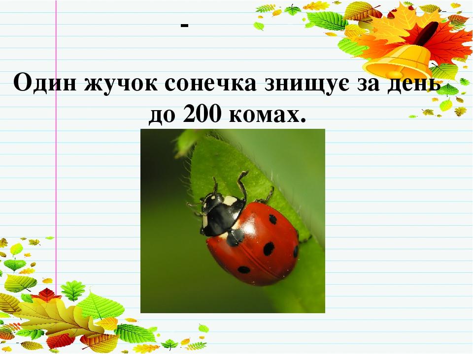 Хвилинка-цікавинка Один жучок сонечка знищує за день до 200 комах.