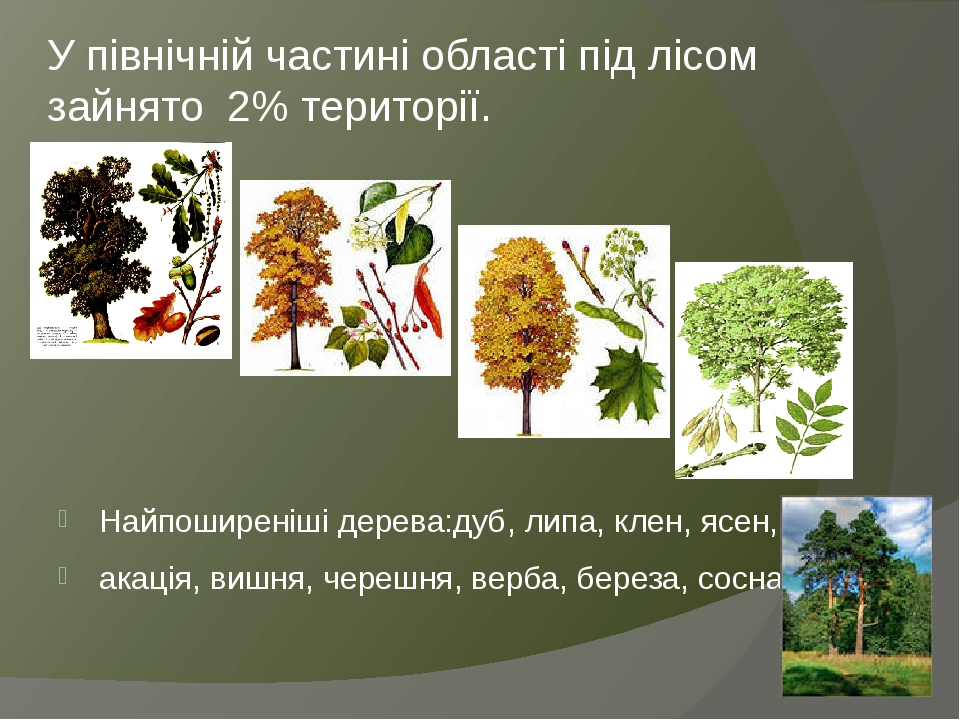 У північній частині області під лісом зайнято 2% території. Найпоширеніші дерева:дуб, липа, клен, ясен, акація, вишня, черешня, верба, береза, сосна.
