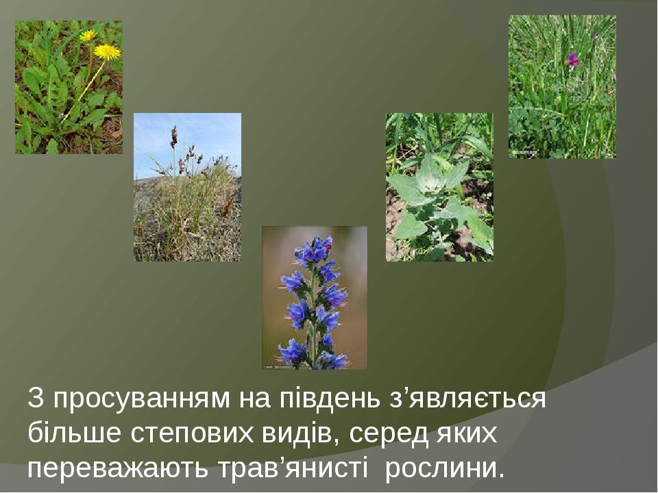 З просуванням на південь з'являється більше степових видів, серед яких переважають трав'янисті рослини.