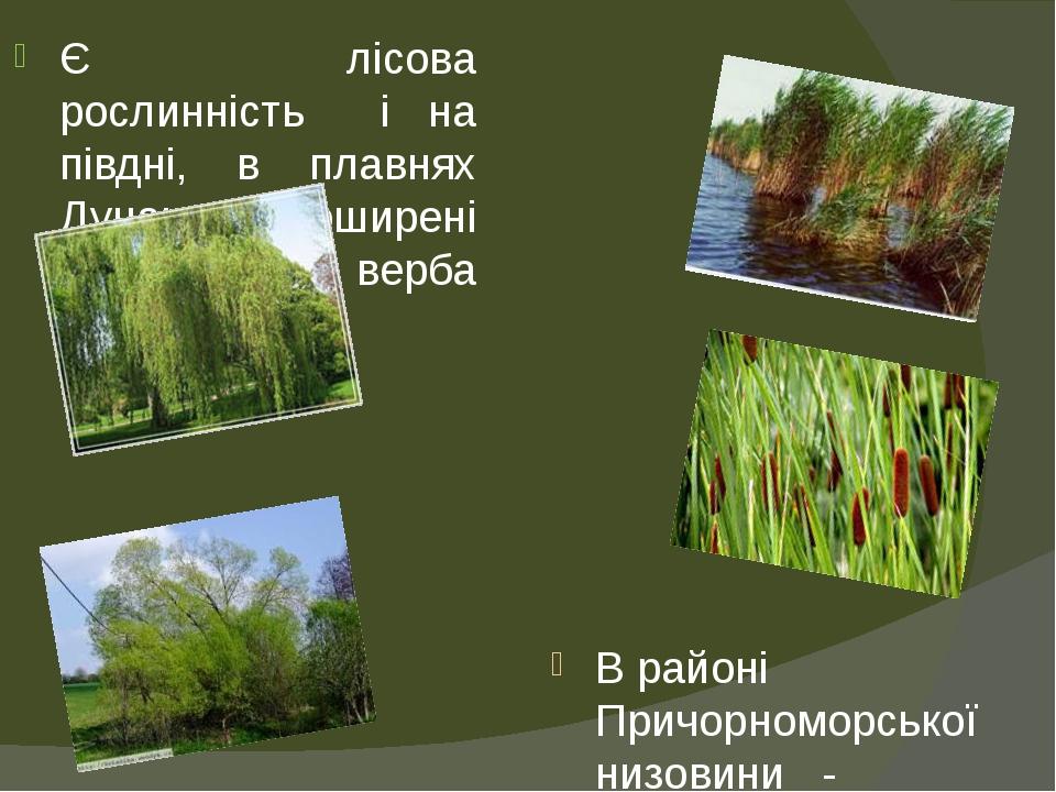 Є лісова рослинність і на півдні, в плавнях Дунаю. Поширені верба біла та верба ламка. В районі Причорноморської низовини - трав'янисті луки та бол...