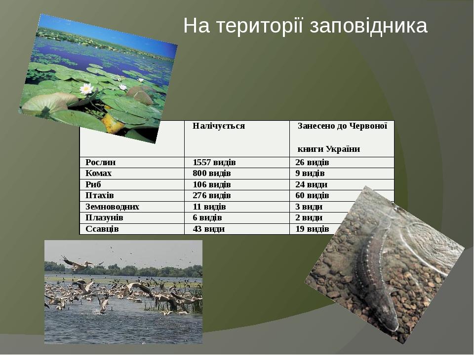 На території заповідника Налічується Занесенодо Червоної книги України Рослин 1557 видів 26 видів Комах 800 видів 9 видів Риб 106 видів 24 види Пта...