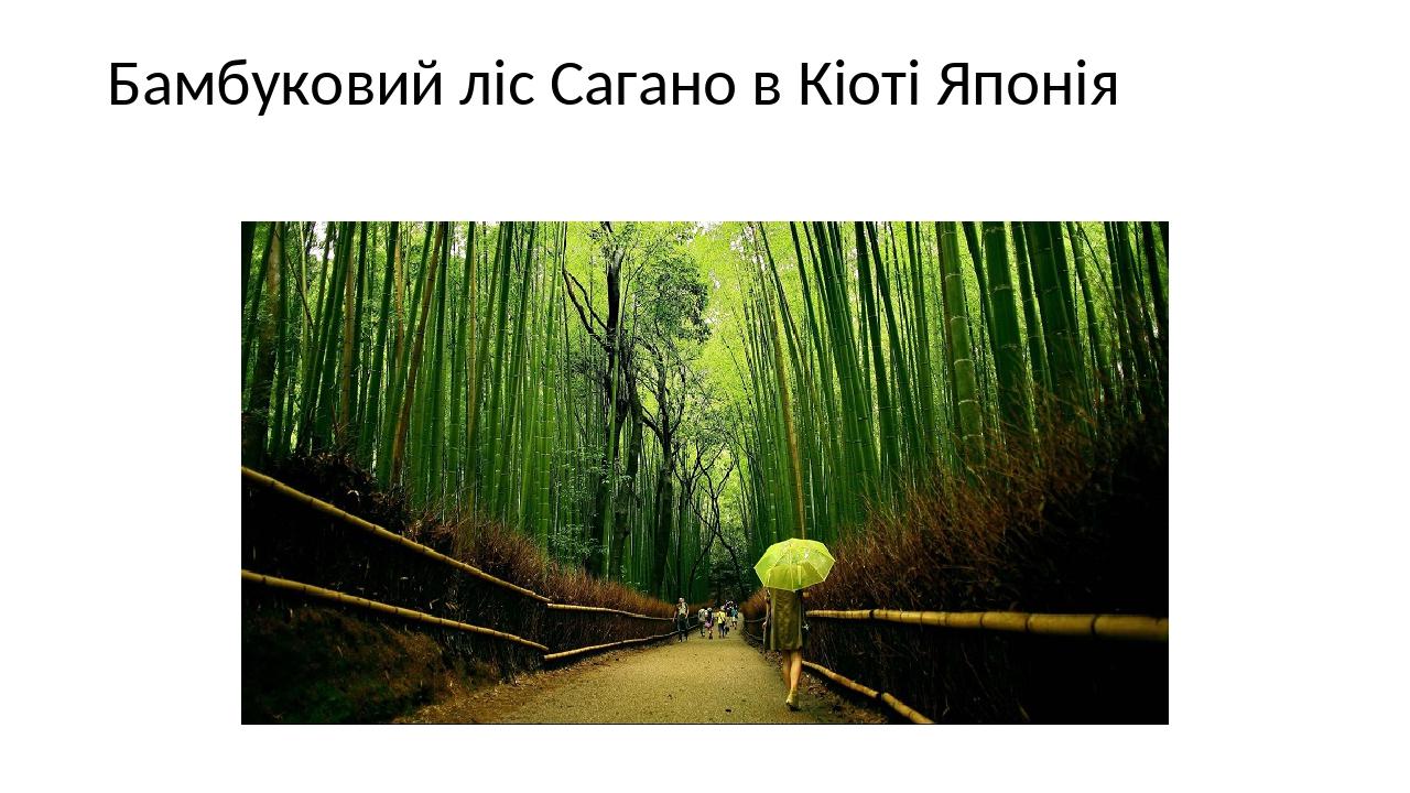 Бамбуковий ліс Сагано в Кіоті Японія