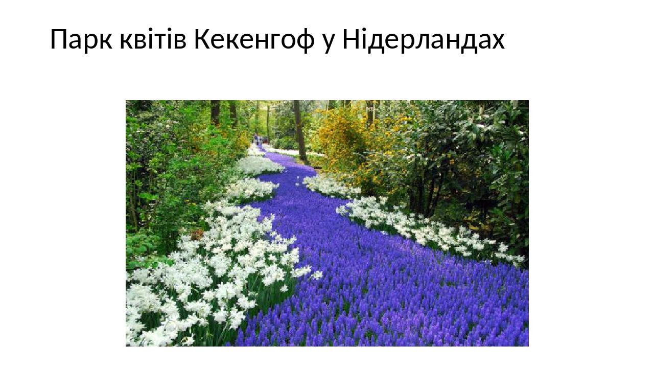 Парк квітів Кекенгоф у Нідерландах