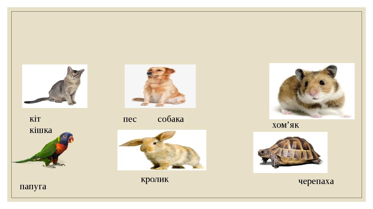 кіт кішка пес собака хом'як папуга кролик черепаха