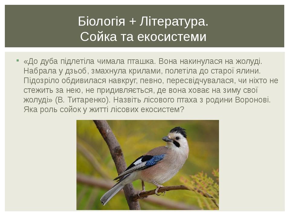 «До дуба підлетіла чимала пташка. Вона накинулася на жолуді. Набрала у дзьоб, змахнула крилами, полетіла до старої ялини. Підозріло обдивилася навк...