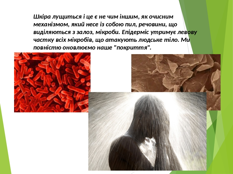 Шкіра лущиться і це є не чим іншим, як очисним механізмом, який несе із собою пил, речовини, що виділяються з залоз, мікроби. Епідерміс утримує лев...