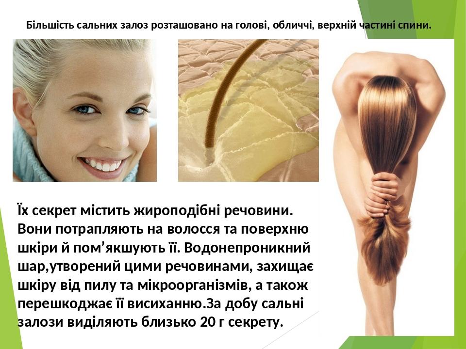 Більшість сальних залоз розташовано на голові, обличчі, верхній частині спини. Їх секрет містить жироподібні речовини. Вони потрапляють на волосся ...