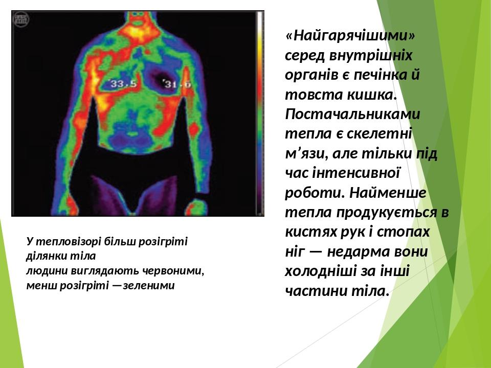 У тепловізорі більш розігріті ділянки тіла людини виглядають червоними, менш розігріті —зеленими «Найгарячішими» серед внутрішніх органів є печінка...