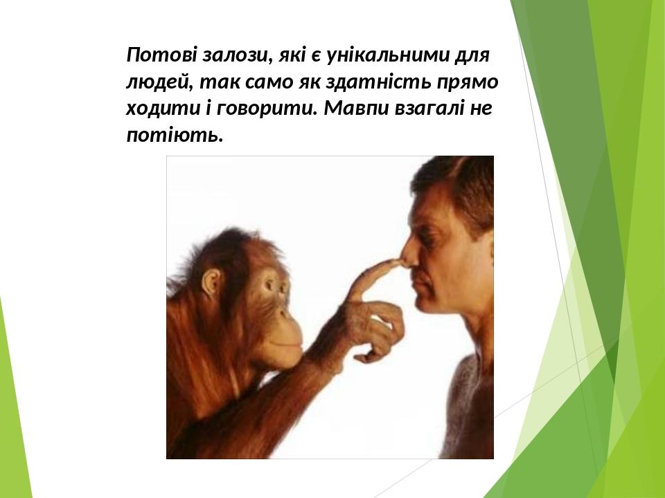 Потові залози, які є унікальними для людей, так само як здатність прямо ходити і говорити. Мавпи взагалі не потіють.