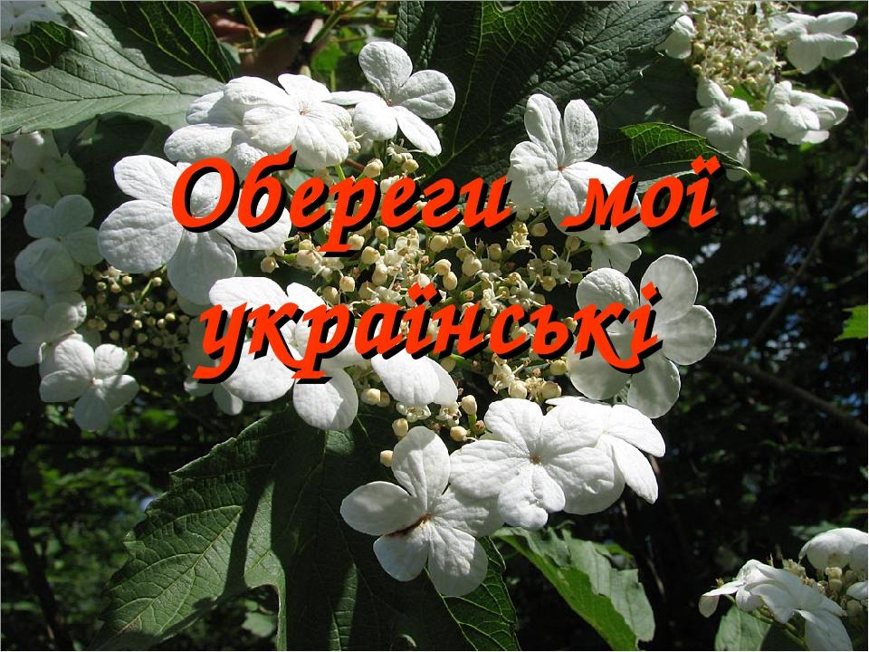 Обереги мої українські