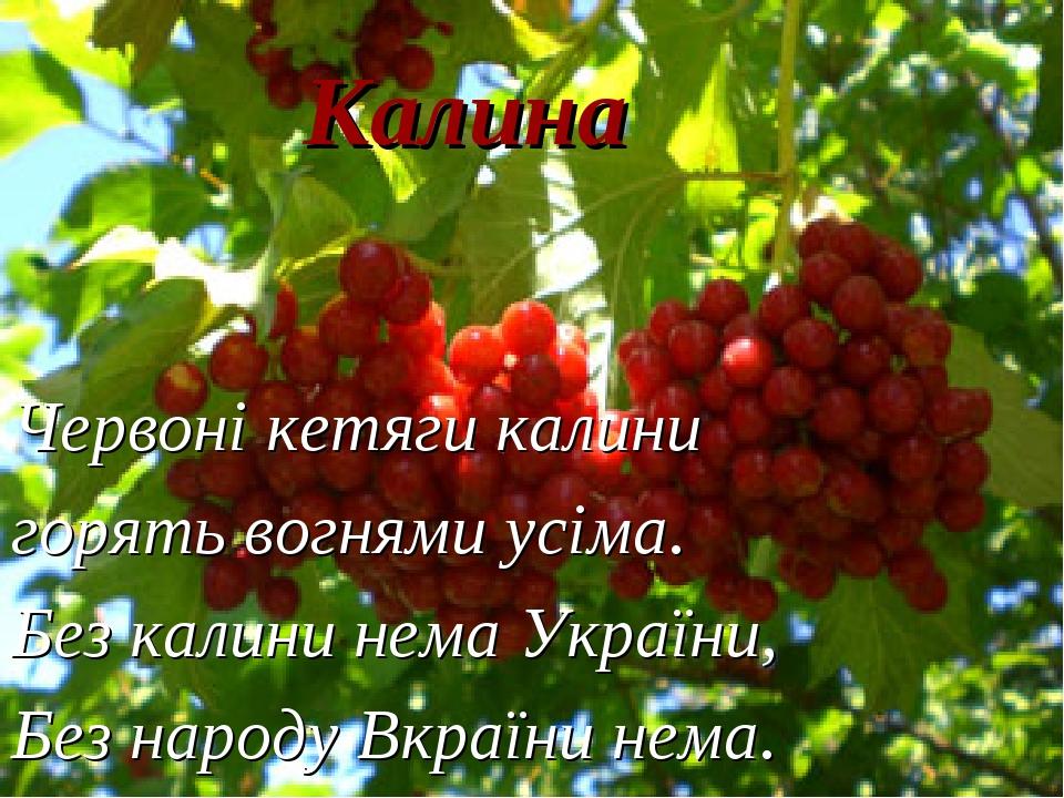 Калина Червоні кетяги калини горять вогнями усіма. Без калини нема України, Без народу Вкраїни нема.