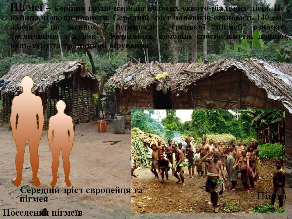 Пігмеї – корінна група народів вологих еквато-ріальних лісів. Це найнижчі люди планети. Середній зріст чоловіків становить 140 см, жінок – ще менше...