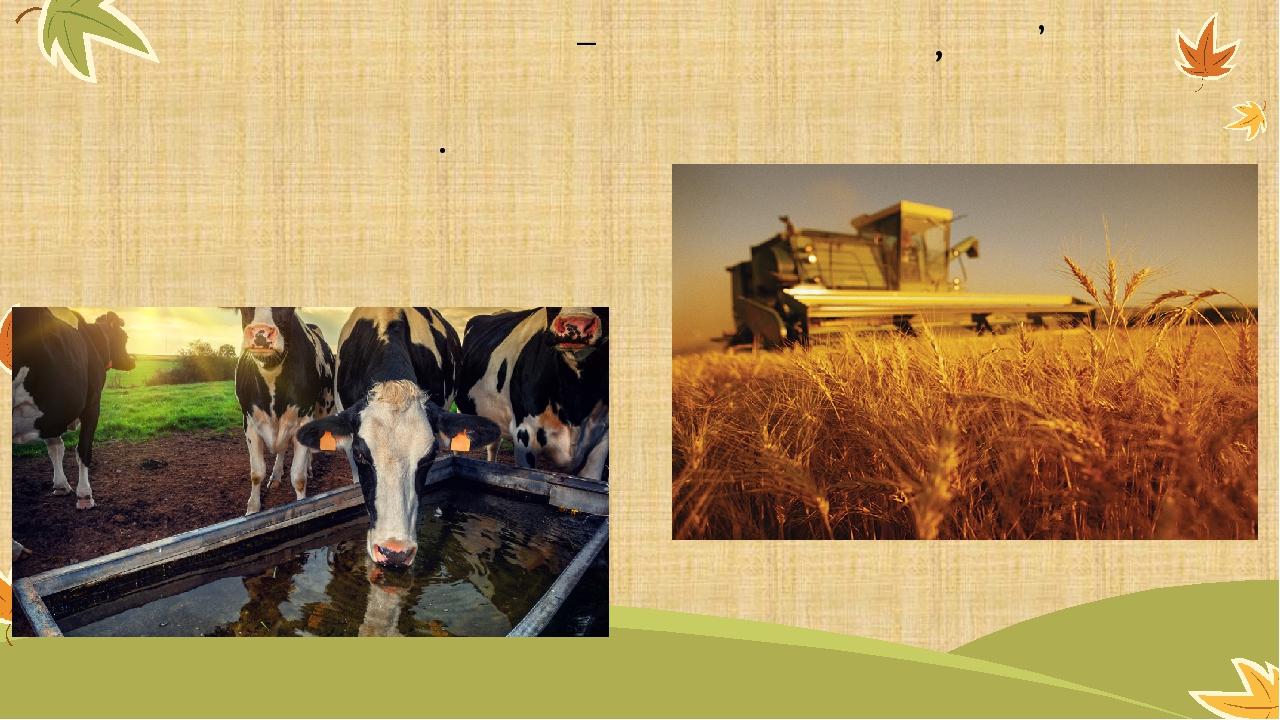 Сільське господарство – це діяльність , пов'язана із вирощуванням культурних рослин і розведенням сільських тварин .