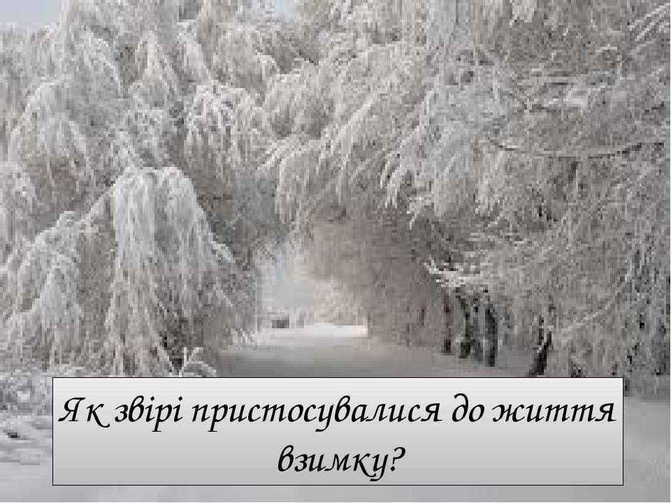 Як звірі пристосувалися до життя взимку?