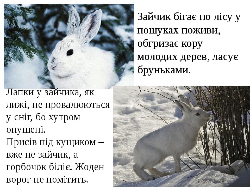 Зайчик бігає по лісу у пошуках поживи, обгризає кору молодих дерев, ласує бруньками. Лапки у зайчика, як лижі, не провалюються у сніг, бо хутром оп...