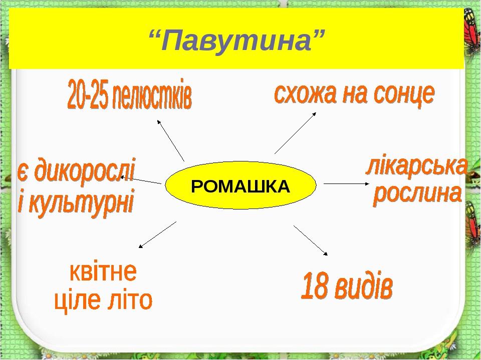 """""""Павутина"""" РОМАШКА"""