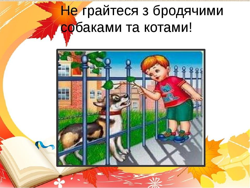 Не грайтеся з бродячими собаками та котами!
