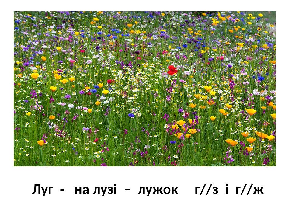 Луг - на лузі – лужок г//з і г//ж